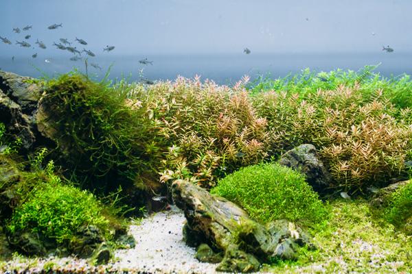 Algen Mineralstoff